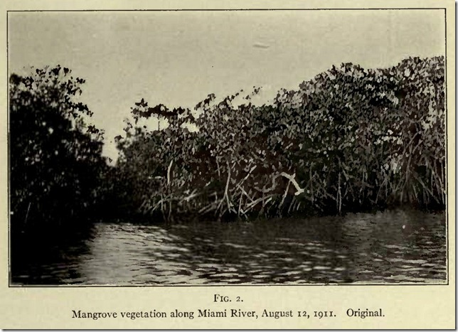Mangroves Along Miami River