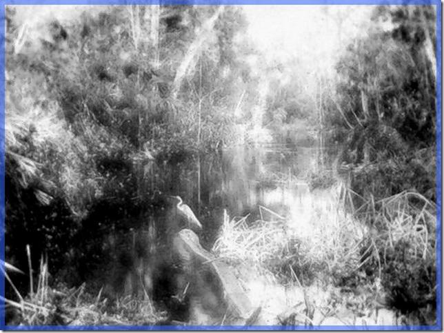 Miami River & Egret