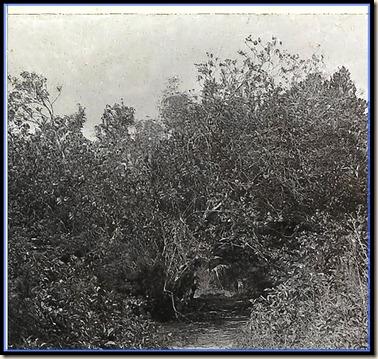 Coconut Grove TRail 1880